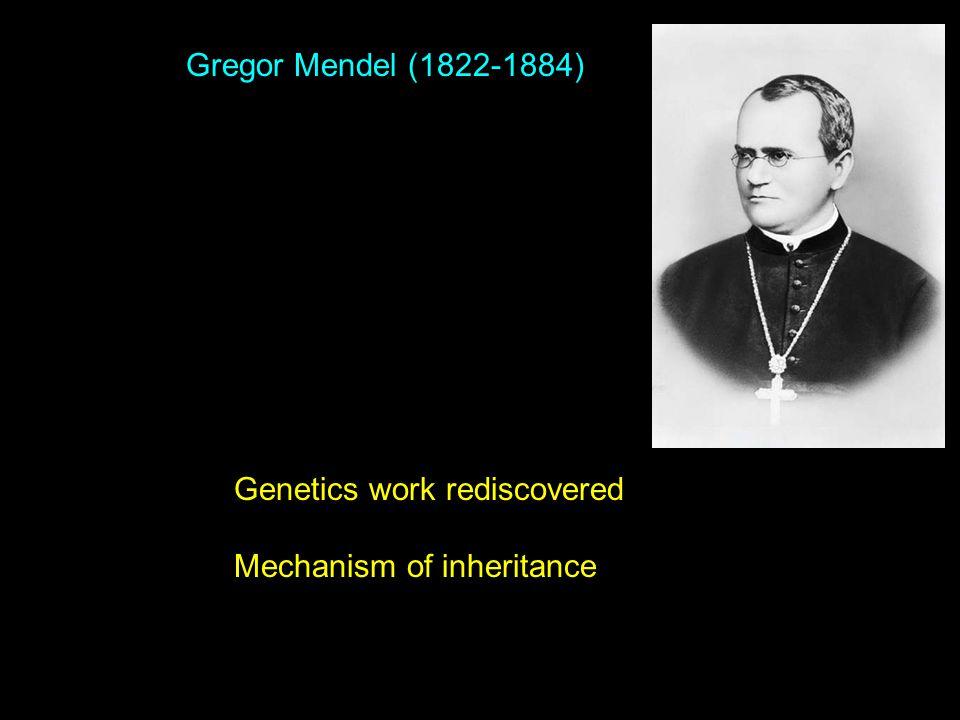 Gregor Mendel (1822-1884) Genetics work rediscovered Mechanism of inheritance