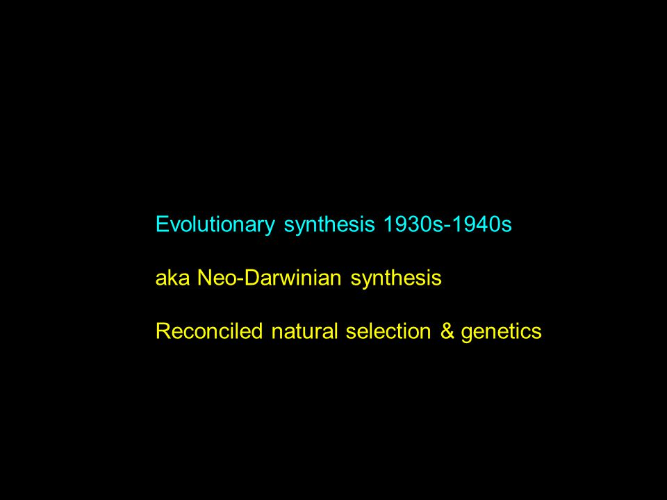 Evolutionary synthesis 1930s-1940s aka Neo-Darwinian synthesis Reconciled natural selection & genetics