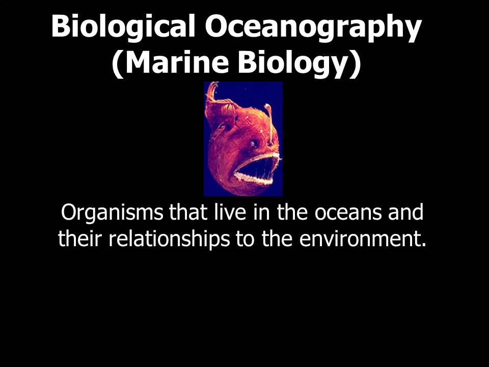 Biological Oceanography (Marine Biology) Organisms that live in the oceans and their relationships to the environment.