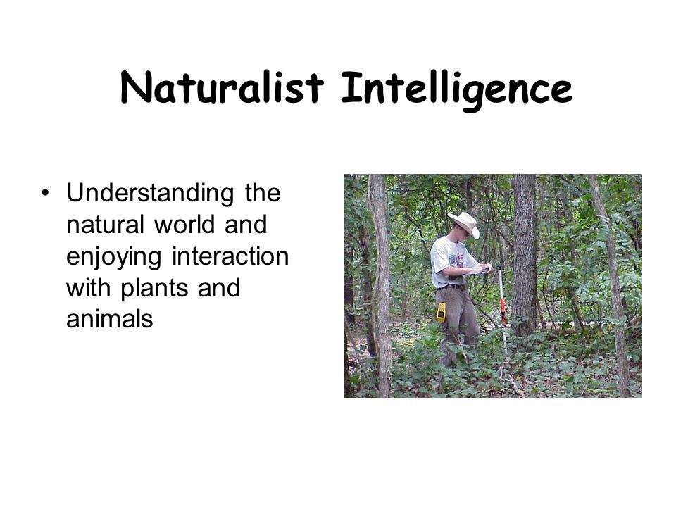 Naturalist Intelligence Understanding the natural world and enjoying interaction with plants and animals