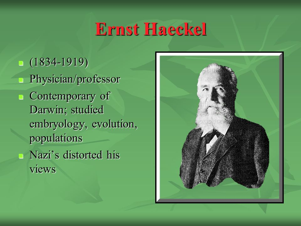 Ernst Haeckel (1834-1919) (1834-1919) Physician/professor Physician/professor Contemporary of Darwin; studied embryology, evolution, populations Contemporary of Darwin; studied embryology, evolution, populations Nazi's distorted his views Nazi's distorted his views