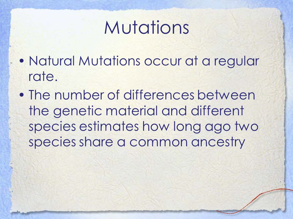 Mutations Natural Mutations occur at a regular rate. The number of differences between the genetic material and different species estimates how long a
