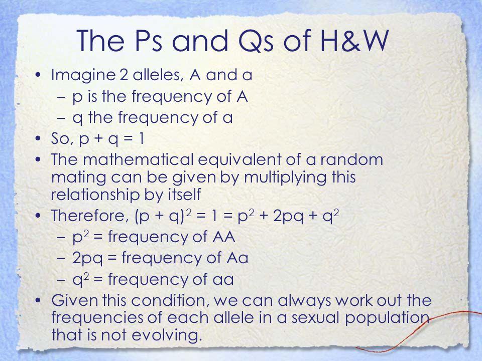 The Ps and Qs of H&W Imagine 2 alleles, A and a –p is the frequency of A –q the frequency of a So, p + q = 1 The mathematical equivalent of a random m