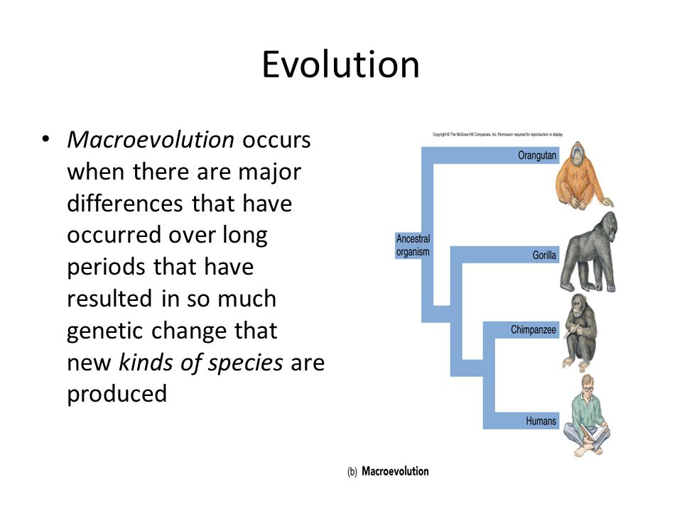 Evolution Macroevolution occurs when there are major differences that have occurred over long periods that have resulted in so much genetic change tha