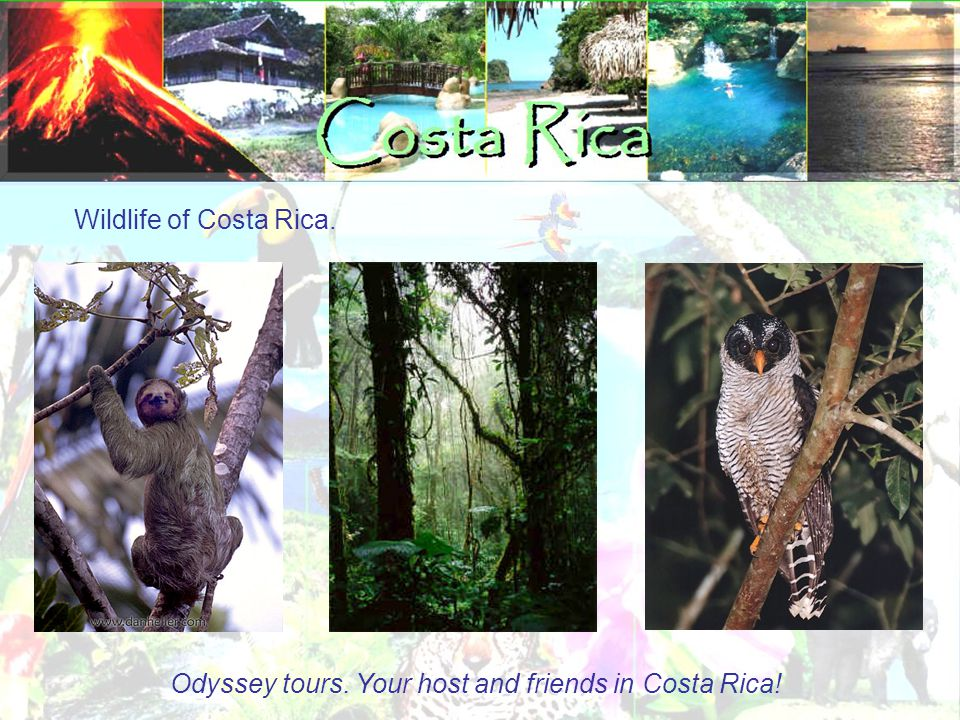 Wildlife of Costa Rica. Odyssey tours. Your host and friends in Costa Rica!