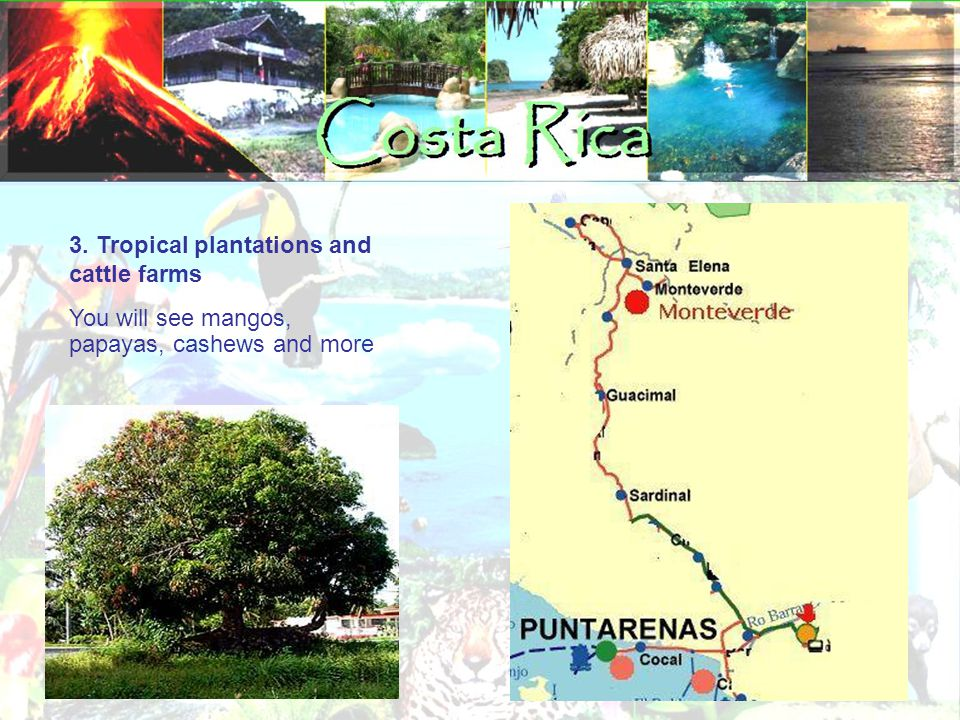 3. Tropical plantations and cattle farms You will see mangos, papayas, cashews and more‏