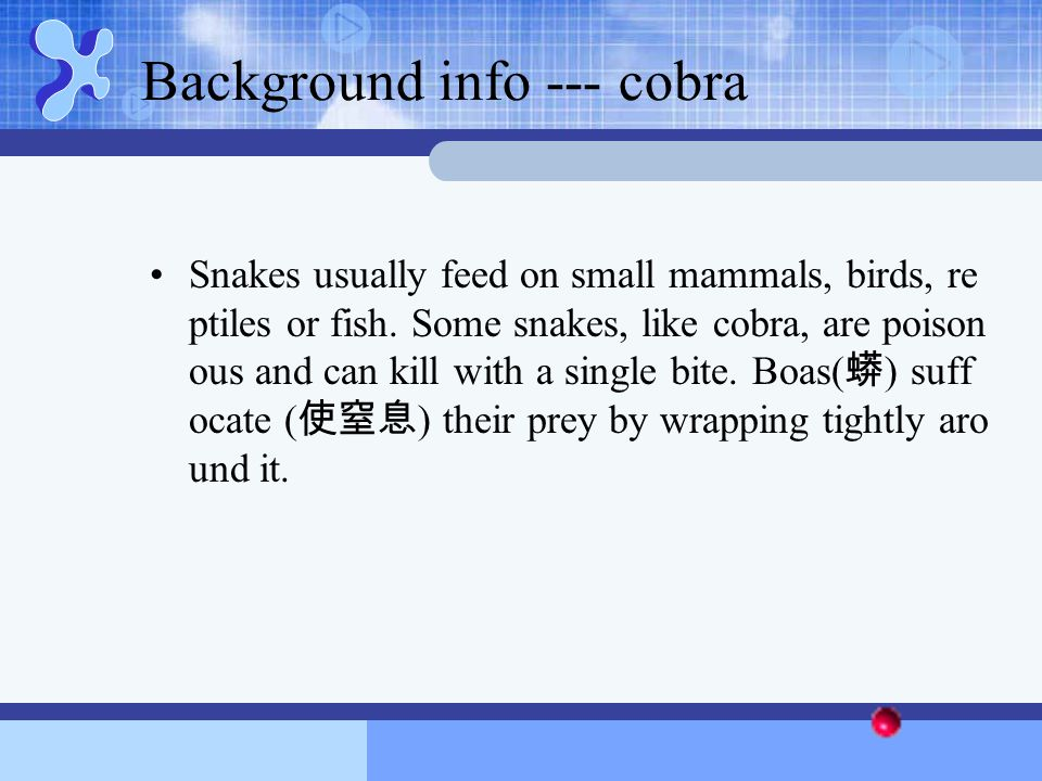 Background info --- cobra Snakes usually feed on small mammals, birds, re ptiles or fish. Some snakes, like cobra, are poison ous and can kill with a