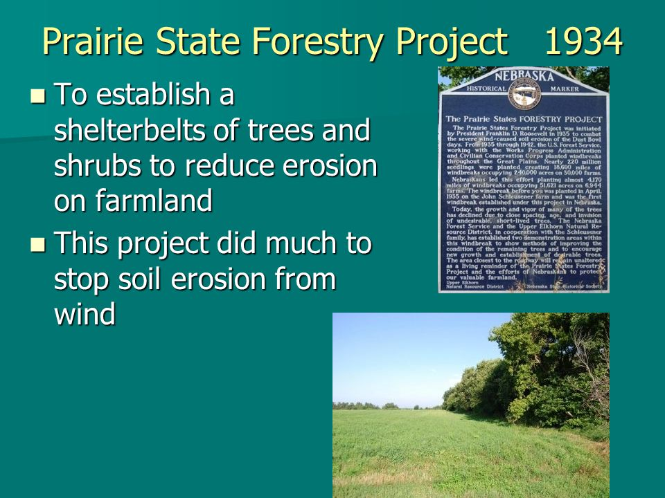 Prairie State Forestry Project 1934 To establish a shelterbelts of trees and shrubs to reduce erosion on farmland To establish a shelterbelts of trees