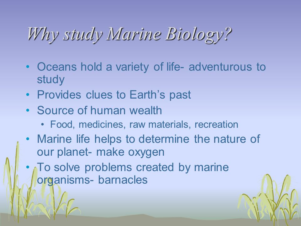 Why study Marine Biology? Oceans hold a variety of life- adventurous to study Provides clues to Earth's past Source of human wealth Food, medicines, r