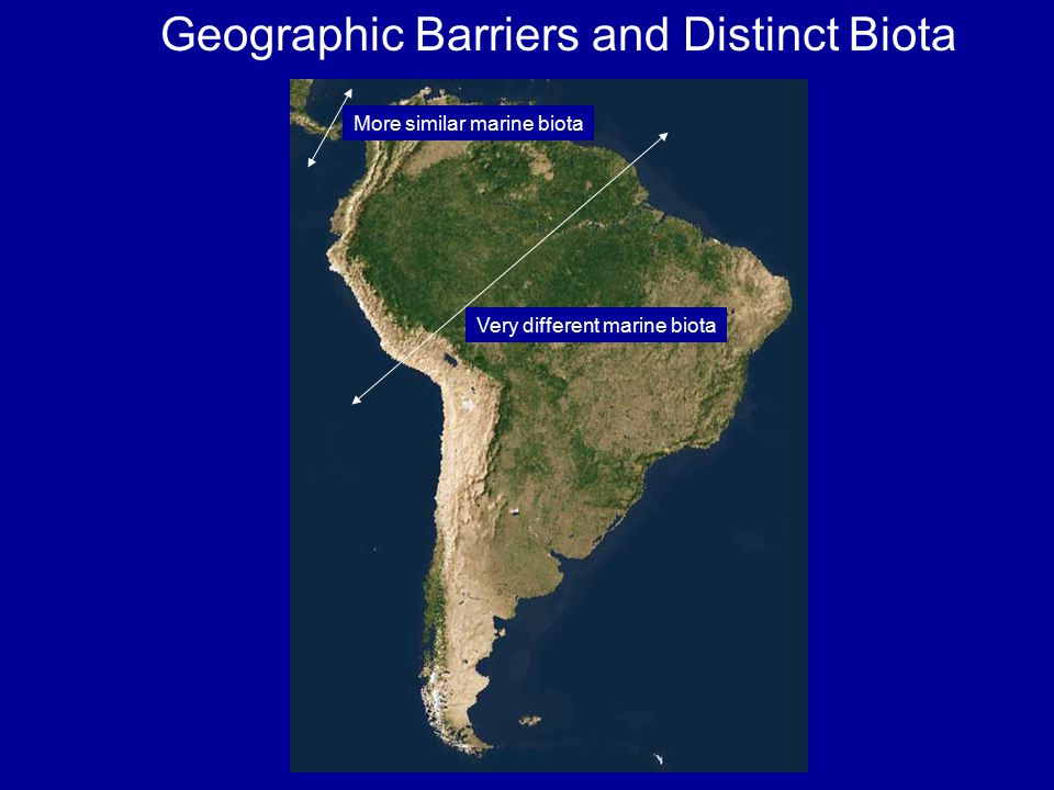Geographic Barriers and Distinct Biota Very different marine biota More similar marine biota