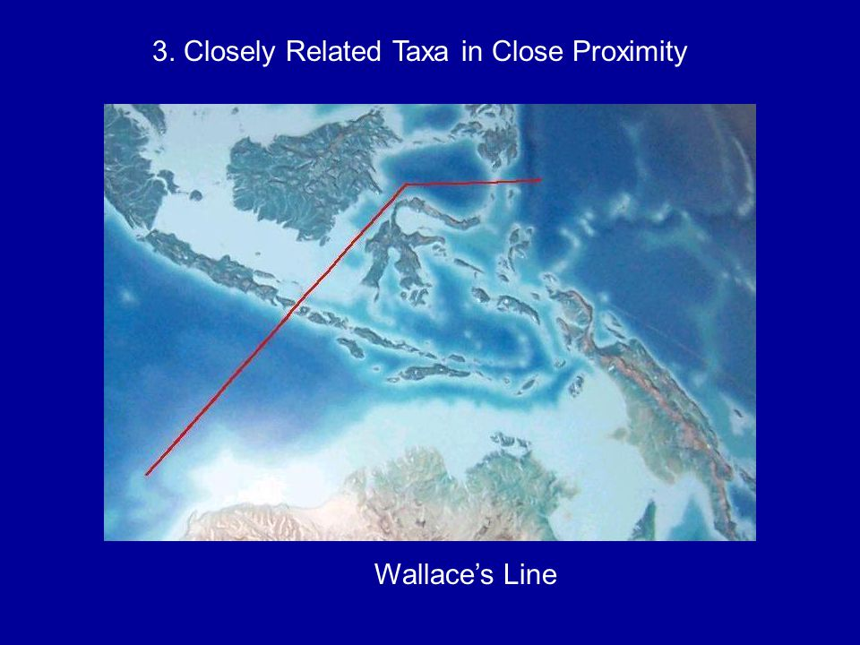 3. Closely Related Taxa in Close Proximity Wallace's Line