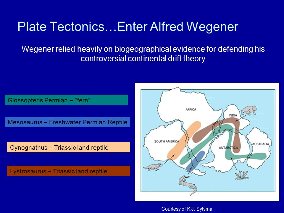 Plate Tectonics…Enter Alfred Wegener Wegener relied heavily on biogeographical evidence for defending his controversial continental drift theory Gloss