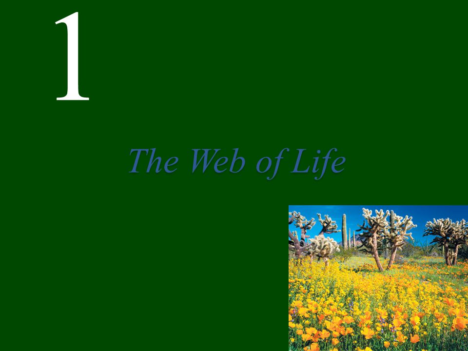 1 The Web of Life
