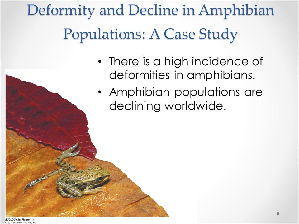 Deformity and Decline in Amphibian Populations: A Case Study There is a high incidence of deformities in amphibians.