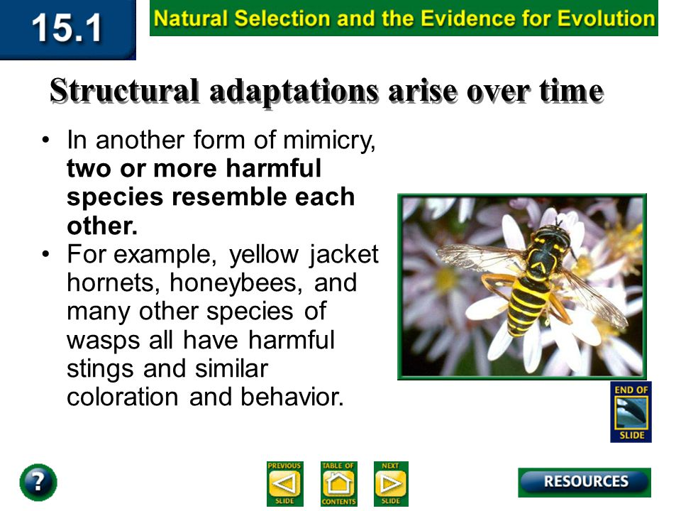 Section 15.1 Summary – pages 393-403 Structural adaptations arise over time In one form of mimicry, a harmless species has adaptations that result in