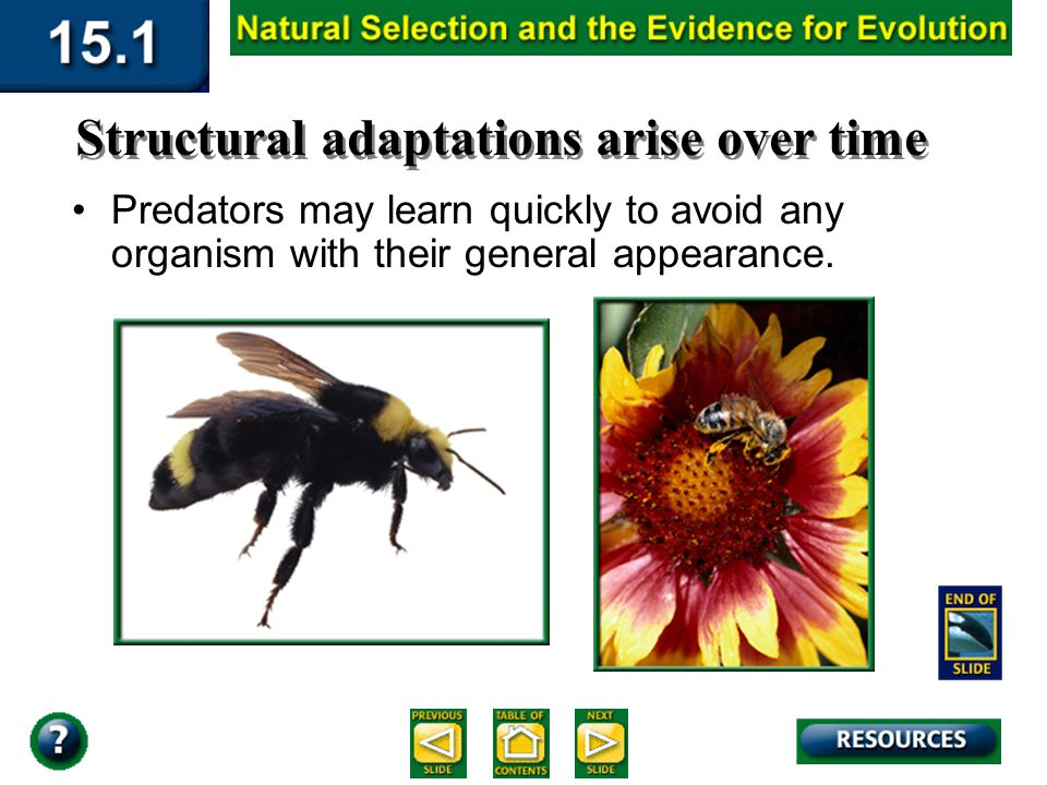 Section 15.1 Summary – pages 393-403 In another form of mimicry, two or more harmful species resemble each other. For example, yellow jacket hornets,