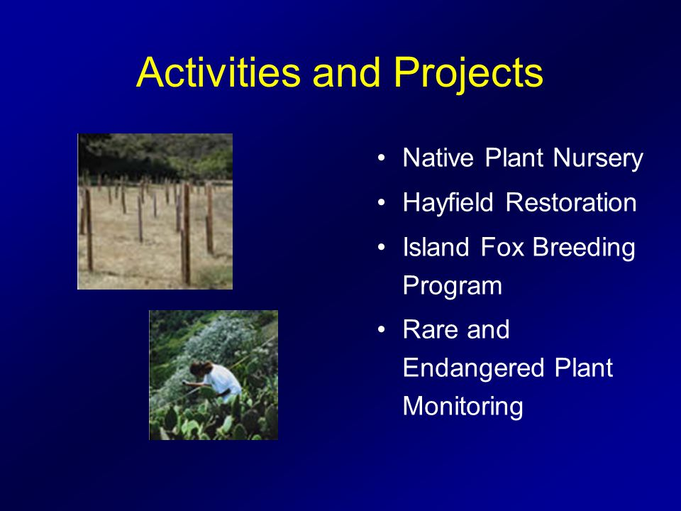 Activities and Projects Native Plant Nursery Hayfield Restoration Island Fox Breeding Program Rare and Endangered Plant Monitoring