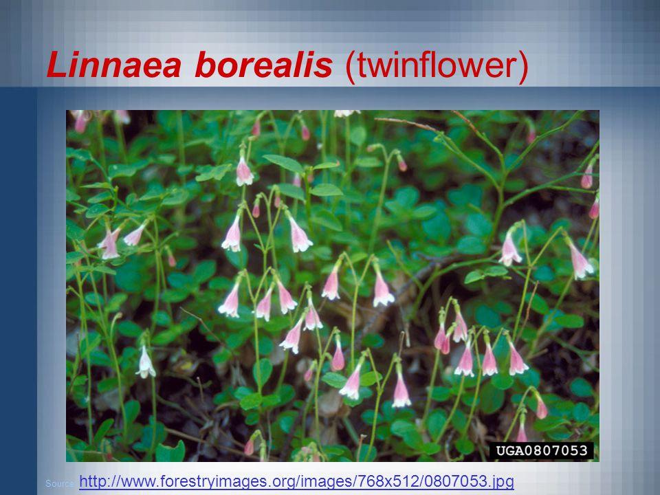 Linnaea borealis (twinflower) Source: http://www.forestryimages.org/images/768x512/0807053.jpg http://www.forestryimages.org/images/768x512/0807053.jpg