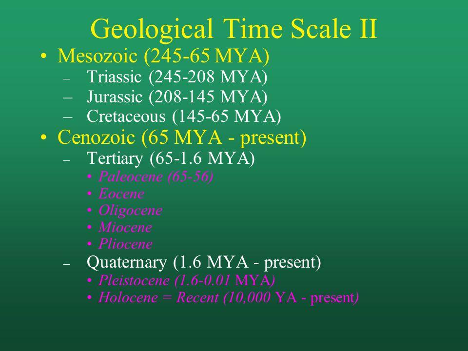 Geological Time Scale II Mesozoic (245-65 MYA) – Triassic (245-208 MYA) –Jurassic (208-145 MYA) –Cretaceous (145-65 MYA) Cenozoic (65 MYA - present) – Tertiary (65-1.6 MYA) Paleocene (65-56) Eocene Oligocene Miocene Pliocene – Quaternary (1.6 MYA - present) Pleistocene (1.6-0.01 MYA) Holocene = Recent (10,000 YA - present)