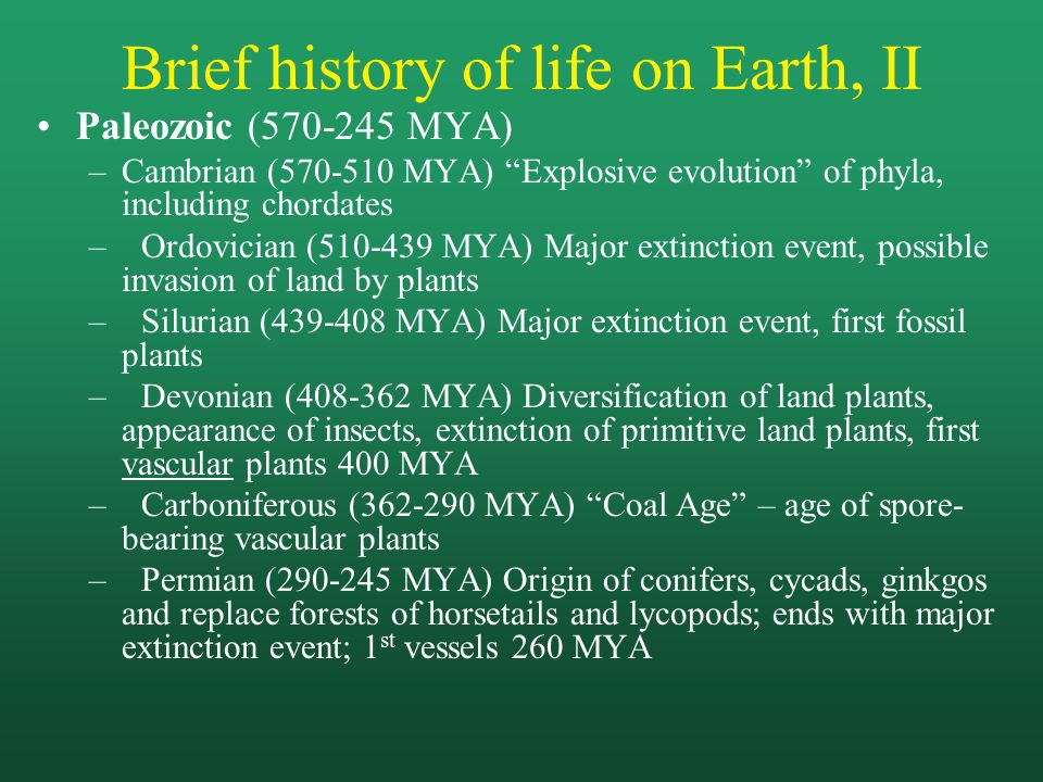 Brief history of life on Earth, II Paleozoic (570-245 MYA) –Cambrian (570-510 MYA) Explosive evolution of phyla, including chordates –Ordovician (510-439 MYA) Major extinction event, possible invasion of land by plants –Silurian (439-408 MYA) Major extinction event, first fossil plants –Devonian (408-362 MYA) Diversification of land plants, appearance of insects, extinction of primitive land plants, first vascular plants 400 MYA –Carboniferous (362-290 MYA) Coal Age – age of spore- bearing vascular plants –Permian (290-245 MYA) Origin of conifers, cycads, ginkgos and replace forests of horsetails and lycopods; ends with major extinction event; 1 st vessels 260 MYA