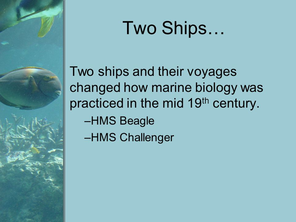 Two Ships… Two ships and their voyages changed how marine biology was practiced in the mid 19 th century. –HMS Beagle –HMS Challenger