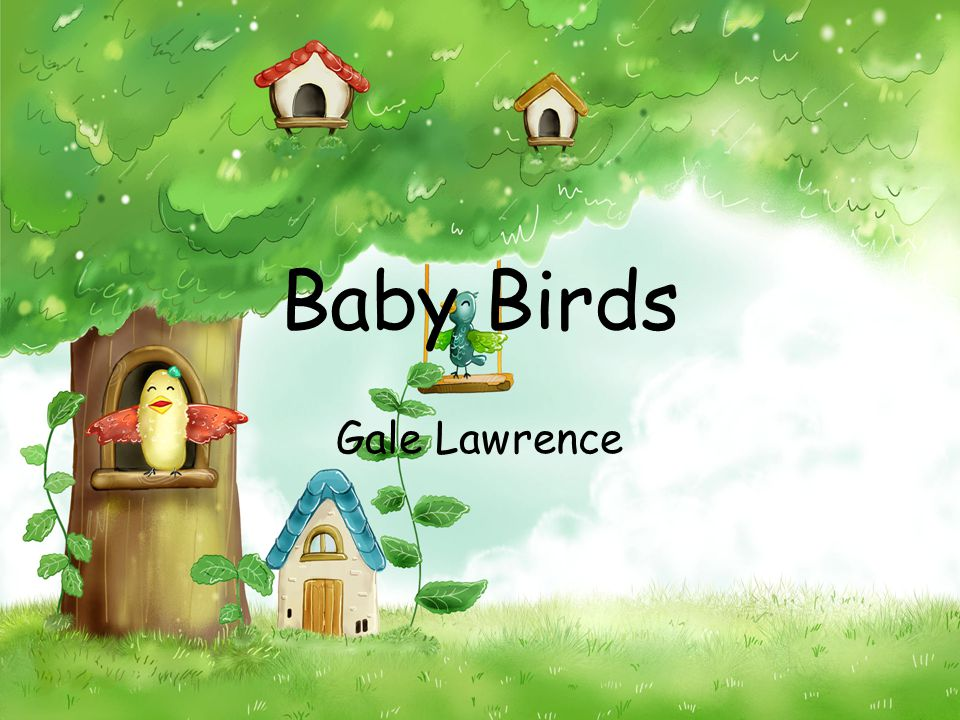 Baby Birds Gale Lawrence