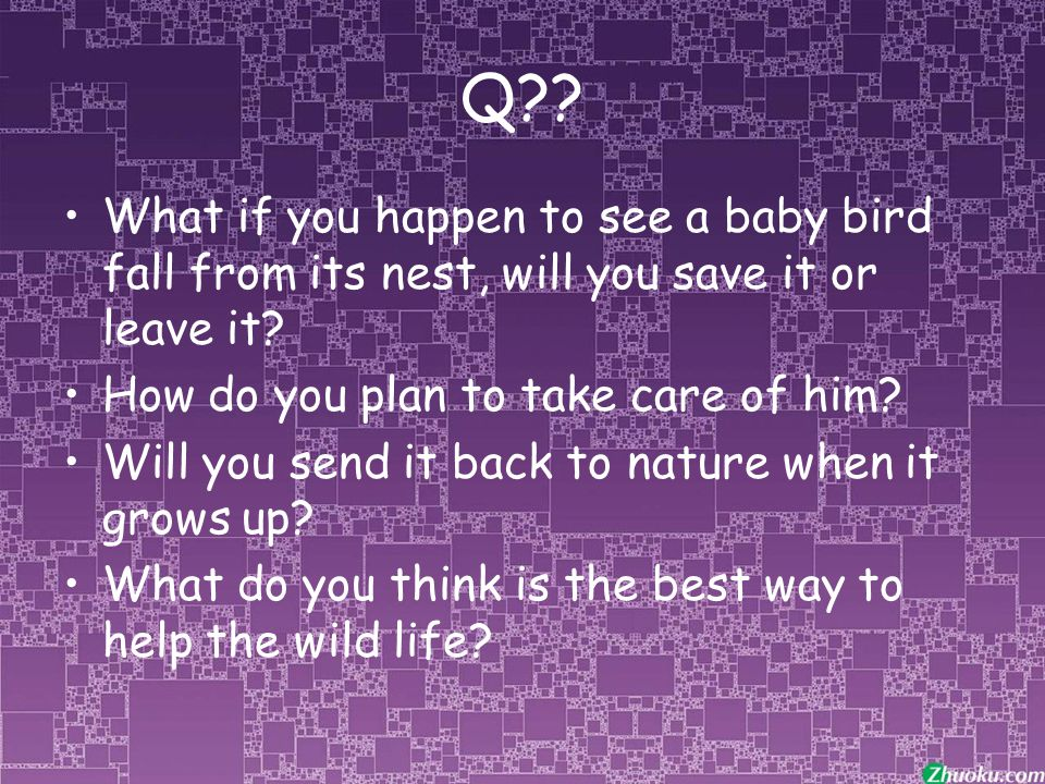 Q . What if you happen to see a baby bird fall from its nest, will you save it or leave it.