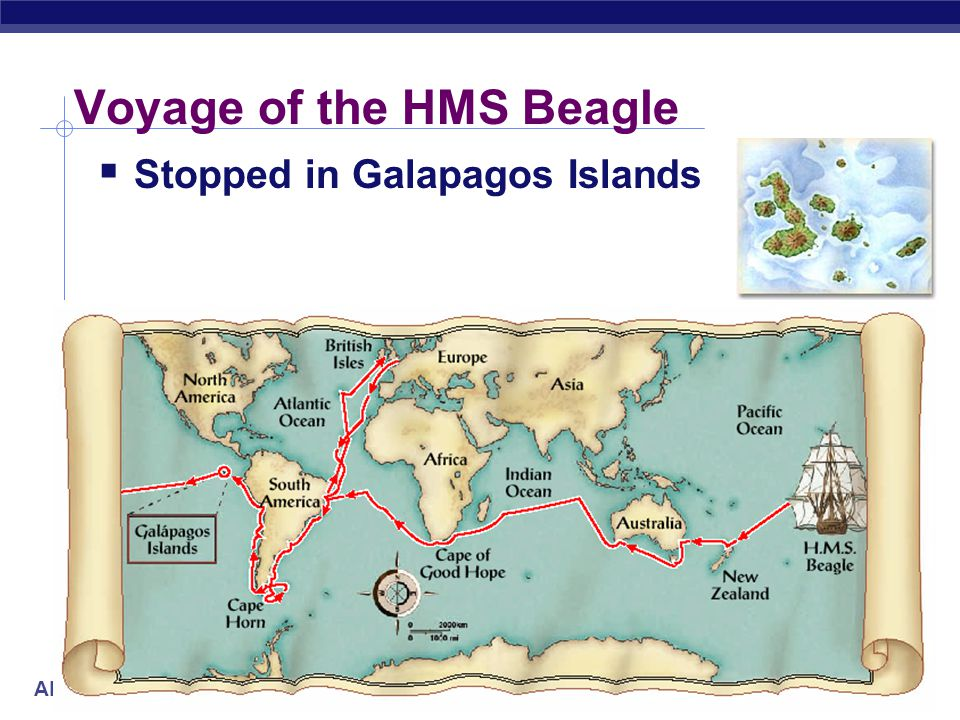 AP Biology Voyage of the HMS Beagle  Travels around the world  1831-1836  makes many observations of natural world  main mission of the Beagle was to chart South American coastline Robert Fitzroy