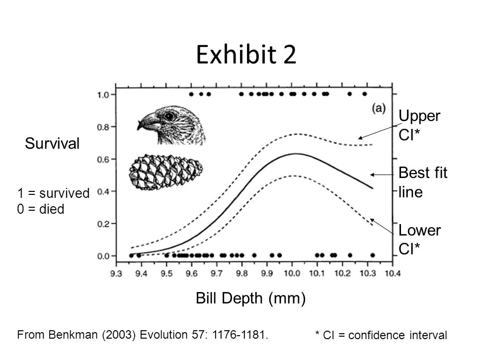 Exhibit 2 Bill Depth (mm) Survival From Benkman (2003) Evolution 57: 1176-1181.