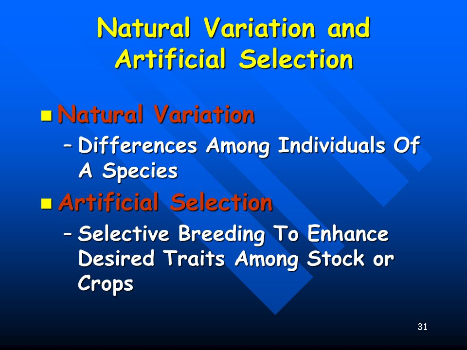 31 Natural Variation and Artificial Selection Natural Variation Natural Variation –Differences Among Individuals Of A Species Artificial Selection Artificial Selection –Selective Breeding To Enhance Desired Traits Among Stock or Crops