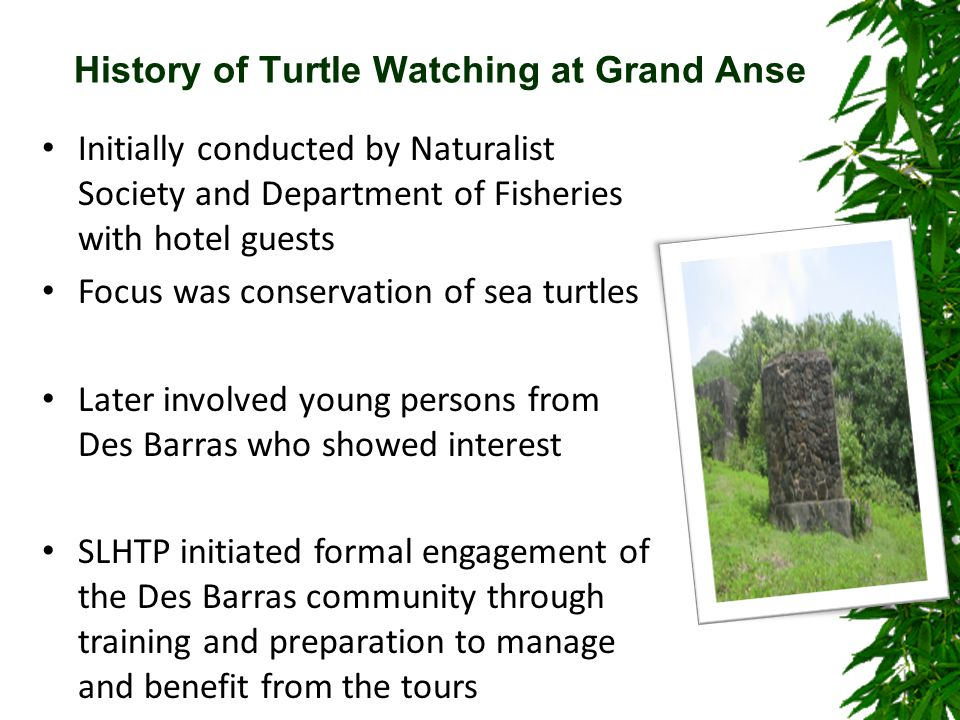 History of Turtle Watching at Grand Anse Initially conducted by Naturalist Society and Department of Fisheries with hotel guests Focus was conservation of sea turtles Later involved young persons from Des Barras who showed interest SLHTP initiated formal engagement of the Des Barras community through training and preparation to manage and benefit from the tours