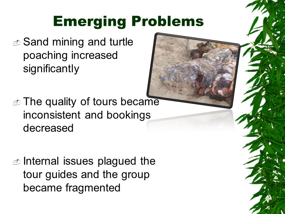 Emerging Problems  Sand mining and turtle poaching increased significantly  The quality of tours became inconsistent and bookings decreased  Internal issues plagued the tour guides and the group became fragmented