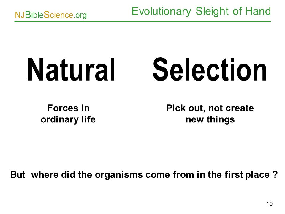 NJ B ible S cience.org 19 Evolutionary Sleight of Hand Natural Selection Forces in ordinary life Pick out, not create new things But where did the org