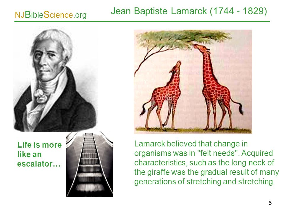 NJ B ible S cience.org 5 Jean Baptiste Lamarck (1744 - 1829) Life is more like an escalator… Lamarck believed that change in organisms was in