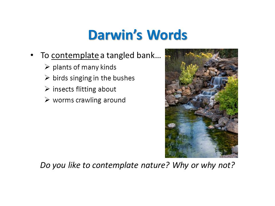 Darwin's Words To contemplate a tangled bank…  plants of many kinds  birds singing in the bushes  insects flitting about  worms crawling around Do you like to contemplate nature.