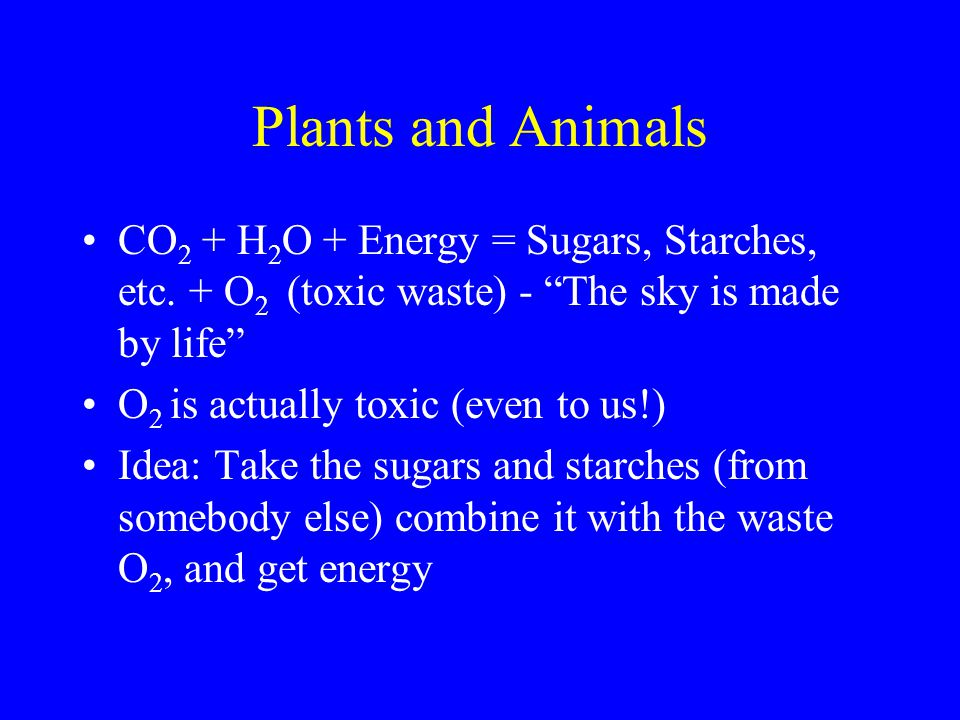 Plants and Animals CO 2 + H 2 O + Energy = Sugars, Starches, etc.