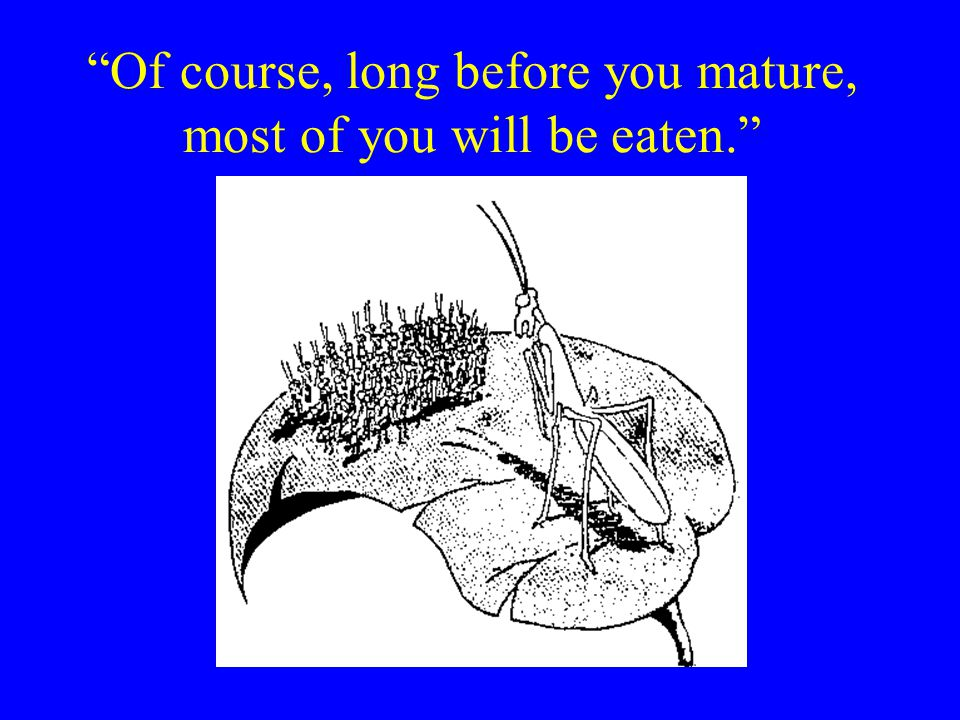 Of course, long before you mature, most of you will be eaten.