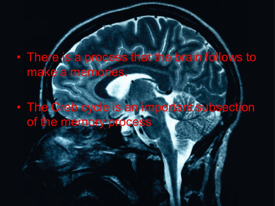 There is a process that the brain follows to make a memories. The Creb cycle is an important subsection of the memory process.
