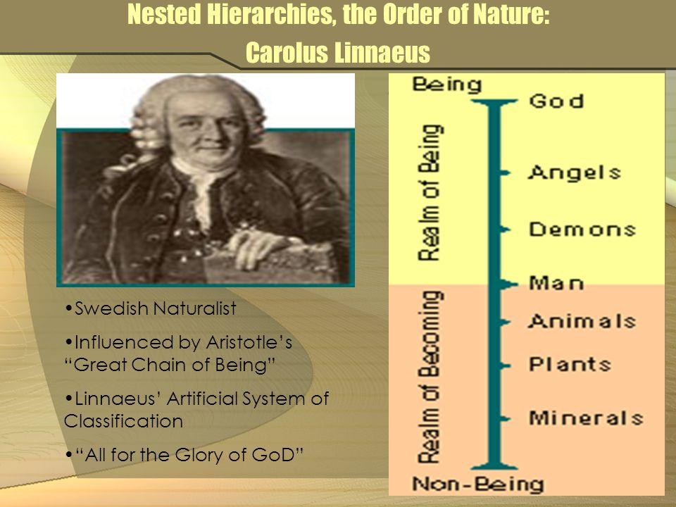 Nested Hierarchies, the Order of Nature: Carolus Linnaeus Swedish Naturalist Influenced by Aristotle's Great Chain of Being Linnaeus' Artificial System of Classification All for the Glory of GoD