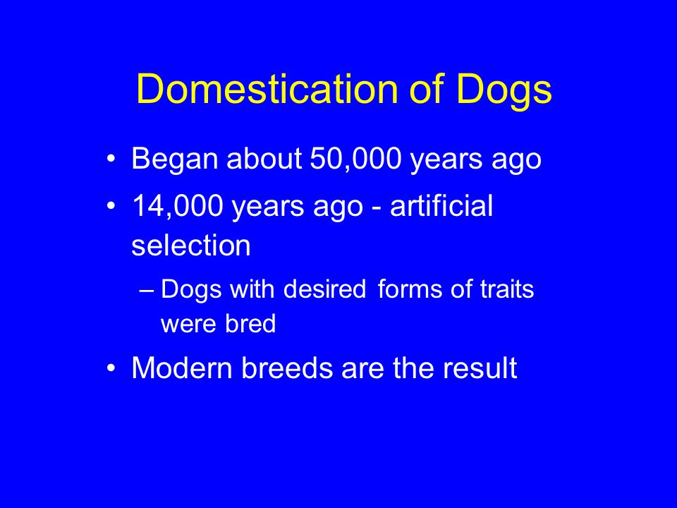 Domestication of Dogs Began about 50,000 years ago 14,000 years ago - artificial selection –Dogs with desired forms of traits were bred Modern breeds are the result