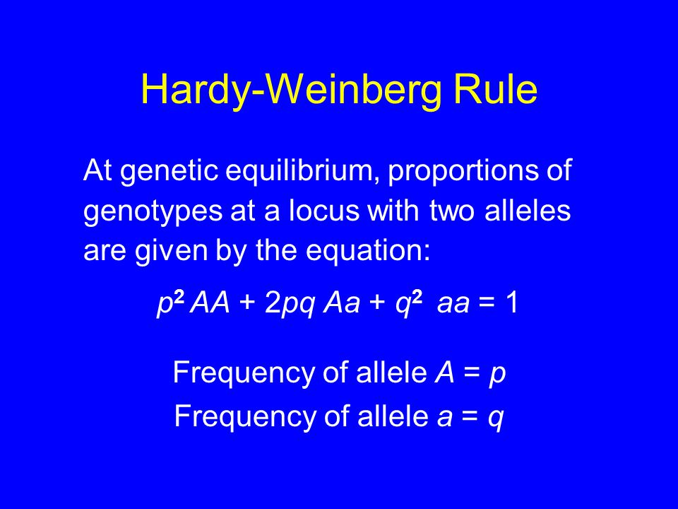 Hardy-Weinberg Rule At genetic equilibrium, proportions of genotypes at a locus with two alleles are given by the equation: p 2 AA + 2pq Aa + q 2 aa = 1 Frequency of allele A = p Frequency of allele a = q