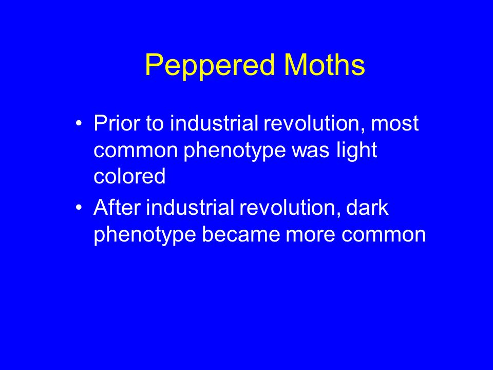 Peppered Moths Prior to industrial revolution, most common phenotype was light colored After industrial revolution, dark phenotype became more common