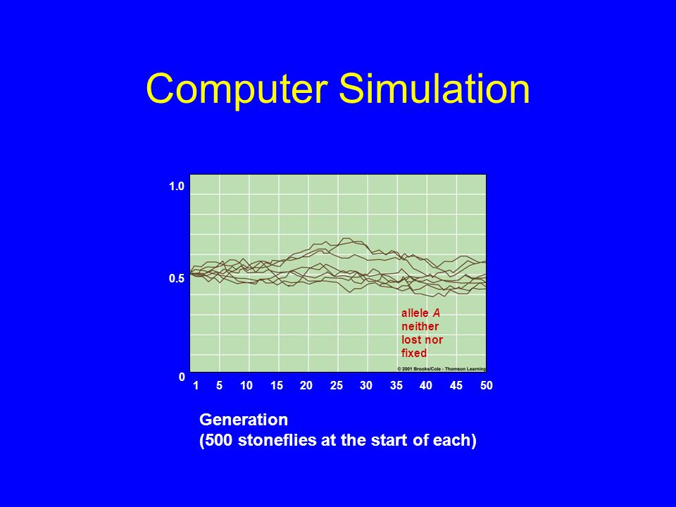 Computer Simulation allele A neither lost nor fixed 1.0 0.5 0 15051015202530354045 Generation (500 stoneflies at the start of each)