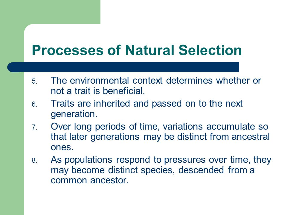 Processes of Natural Selection 5. The environmental context determines whether or not a trait is beneficial. 6. Traits are inherited and passed on to