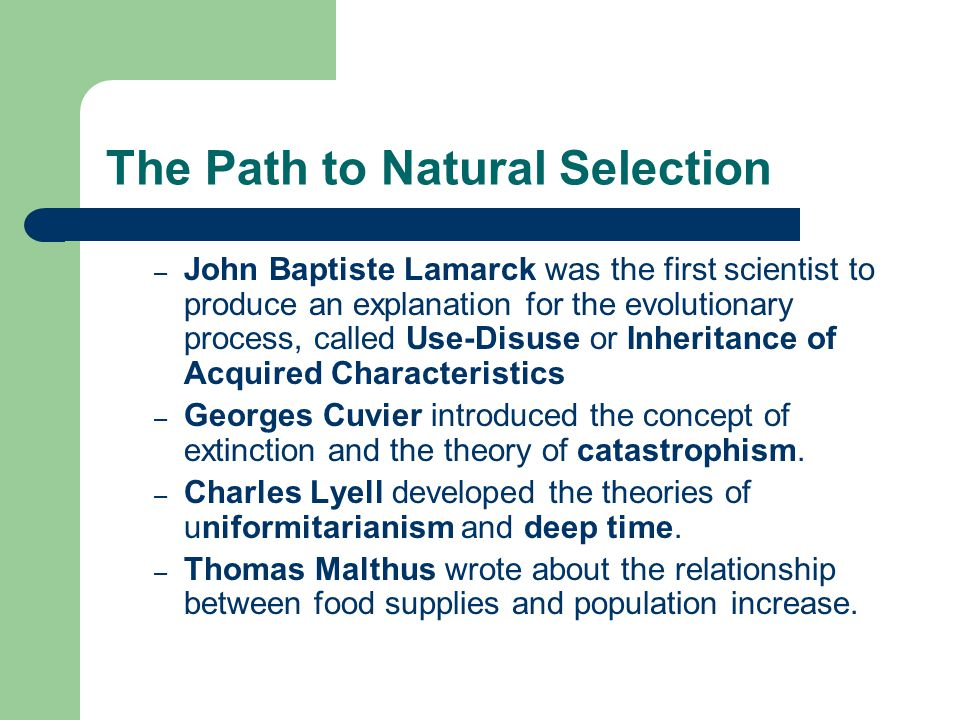 The Path to Natural Selection – John Baptiste Lamarck was the first scientist to produce an explanation for the evolutionary process, called Use-Disuse or Inheritance of Acquired Characteristics – Georges Cuvier introduced the concept of extinction and the theory of catastrophism.