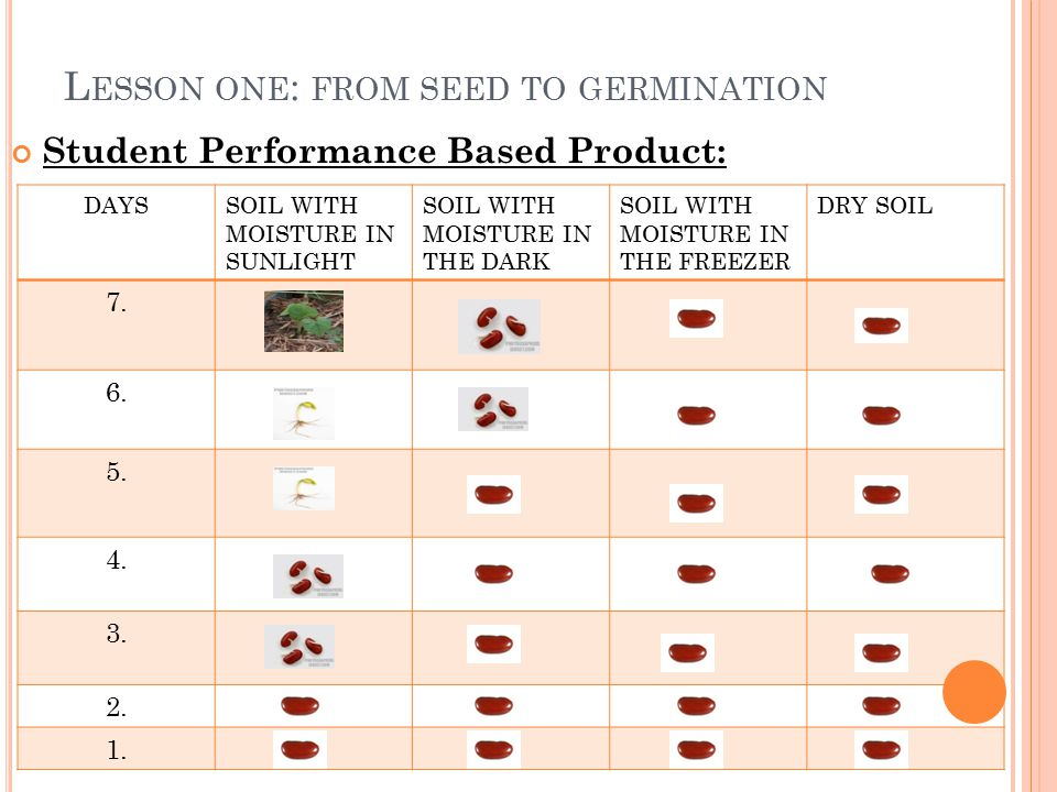 L ESSON ONE : FROM SEED TO GERMINATION Student Performance Based Product: DAYSSOIL WITH MOISTURE IN SUNLIGHT SOIL WITH MOISTURE IN THE DARK SOIL WITH MOISTURE IN THE FREEZER DRY SOIL 7.