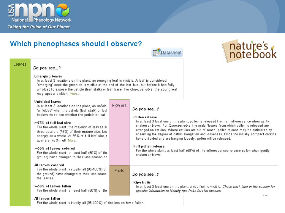18 Which phenophases should I observe?