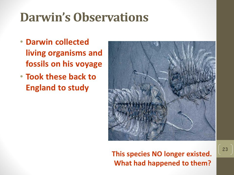 Darwin's Observations Darwin collected living organisms and fossils on his voyage Took these back to England to study 23 This species NO longer existed.