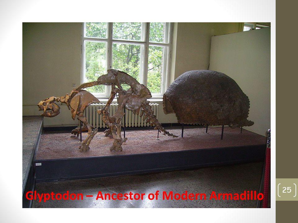 25 Glyptodon – Ancestor of Modern Armadill o