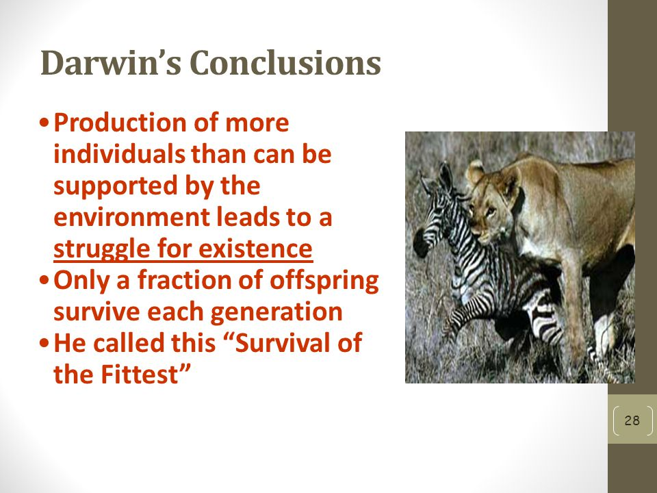 Darwin's Conclusions Production of more individuals than can be supported by the environment leads to a struggle for existence Only a fraction of offspring survive each generation He called this Survival of the Fittest 28